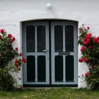 Eingang mit Rosen-Stöcken